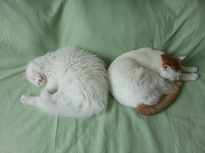 Why Cats Curl Up Sleeping?